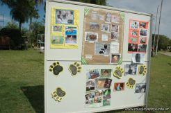 expo-mascotas-2009-318