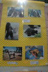 expo-mascotas-2009-325