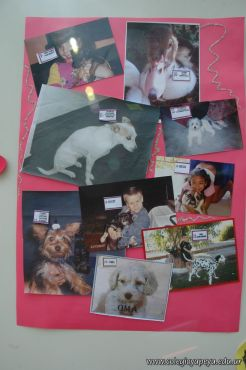 expo-mascotas-2009-331