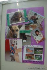 expo-mascotas-2009-332