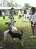 expo-mascotas-2009-56