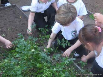 Día de Campo en el Jardín 47