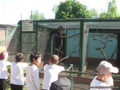 Visita al Zoologico 10