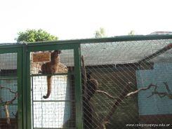 Visita al Zoologico 11