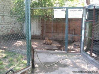 Visita al Zoologico 12