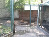 Visita al Zoologico 13