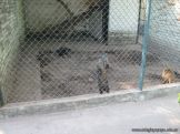 Visita al Zoologico 14