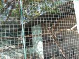 Visita al Zoologico 17