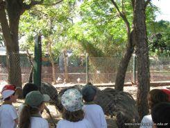 Visita al Zoologico 33