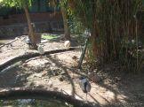 Visita al Zoologico 36