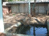 Visita al Zoologico 4