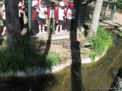 Visita al Zoologico 45