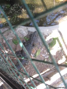 Visita al Zoologico 49