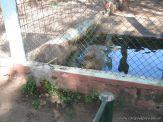 Visita al Zoologico 5