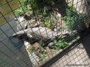 Visita al Zoologico 50