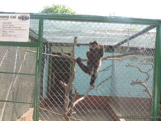 Visita al Zoologico 9
