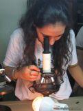 Microscopio 10