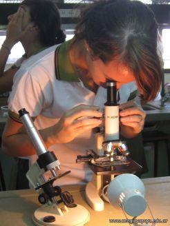Microscopio 15