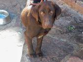 Expo Mascotas Virtual 11