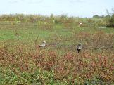 Viaje a los Esteros del Ibera 2010 113