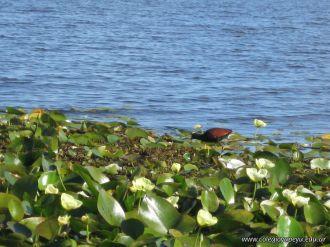 Viaje a los Esteros del Ibera 2010 117