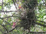 Viaje a los Esteros del Ibera 2010 56
