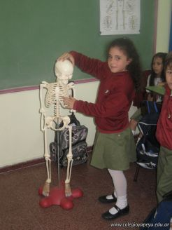 Sistema Osteoartromuscular 17