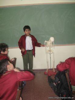 Sistema Osteoartromuscular 43