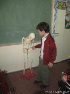 Sistema Osteoartromuscular 45