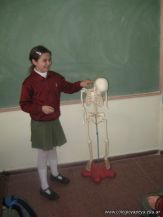 Sistema Osteoartromuscular 48