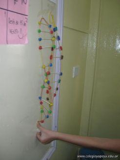 Estructura Espacial del ADN 38