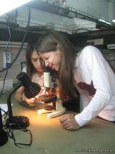 Observando por el Microscopio 6