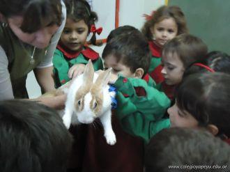 Preparativos y Festejos por el Dia del Animal 89