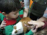 Preparativos y Festejos por el Dia del Animal 94
