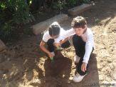 1er grado Trabajando en la Huerta 5