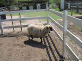 Visita a la Granja La Ilusion 2011 181