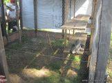 Visita a la Granja La Ilusion 2011 323