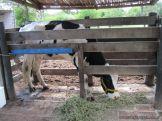 Visita a la Granja La Ilusion 2011 51