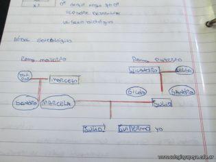 Arbol Genealogico 15