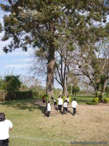 Reconociendo Arboles en el Campo Deportivo 7