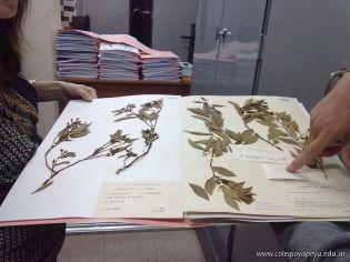 Determinacion taxonomica de una planta de mandarina 11