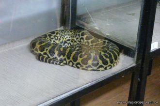 Visita al Serpentario 12