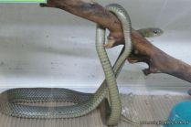 Visita al Serpentario 34