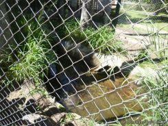 Visita al Zoologico de Salas de 3 22
