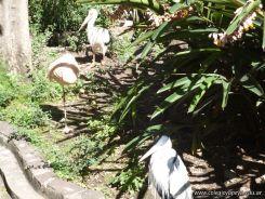Visita al Zoologico de Salas de 3 32