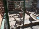 Visita al Zoologico de Salas de 3 41