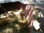 Visita al Zoologico de Salas de 3 59