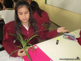 Reproduccion asexual de vegetales 20
