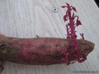 Reproduccion asexual de vegetales 34