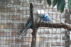 Visita al Corrientes Loro Park 15